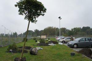 ogród parkingowy