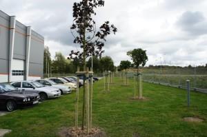 zieleń przy parkingu