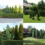 zieleń ogrodowa