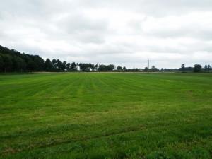 trawa rolkowana