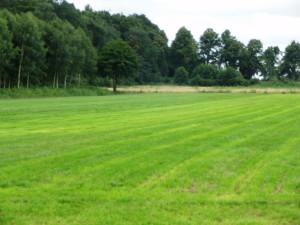 trawa rolowana