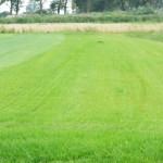 trawa na polu